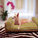 furniture-for-pets-1