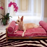 furniture-for-pets-2